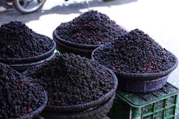 Đặc sản Đà Lạt - dâu tằm đặc sản Đà Lạt theo mùa - datphongdalat.vn-01
