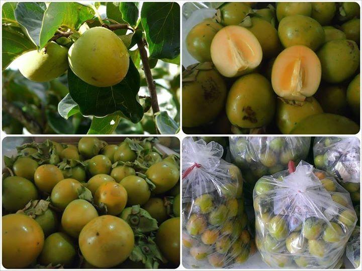 Đặc sản Đà Lạt - hồng giòn đặc sản Đà Lạt theo mùa - datphongdalat.vn-2