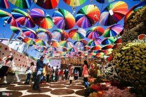 festival-hoa-dalat-datphongdalat-vn-03
