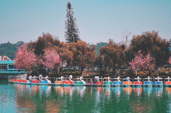 Thành phố Đà Lạt - Lễ hội hoa Mai Anh Đào Đà Lạt 2018 - datphongdalat.vn-03