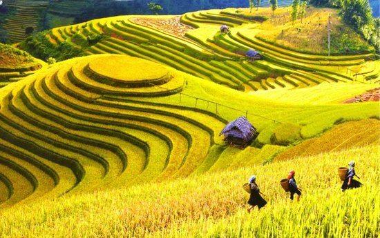 Sapa - Thành phố ngàn mây cùng lúa vàng - datphongdalat.vn-01