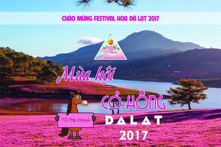 Lễ hội cỏ hồng tại đồi cỏ Hồng Đà Lạt 2017