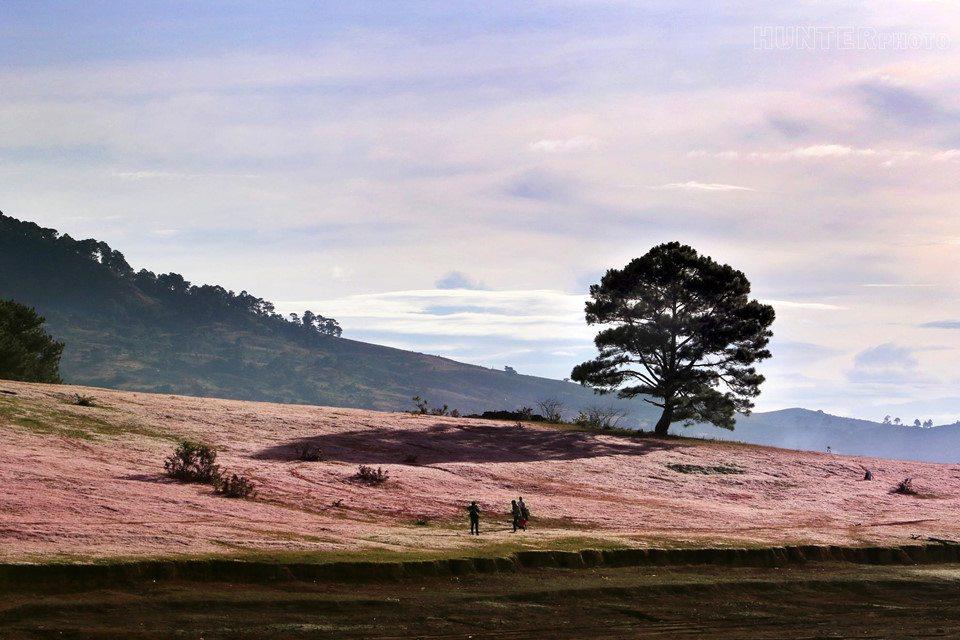 Đồi cỏ hồng Đà Lạt mang vẻ đẹp mộc mạc nhưng đầy cuốn hút