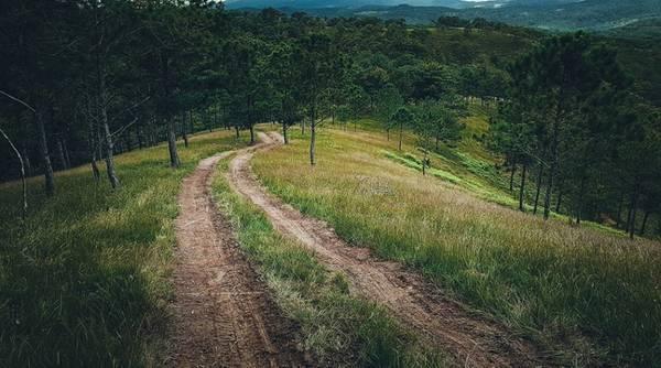 Hướng dẫn đường đi cây thông cô đơn Đà Lạt 2