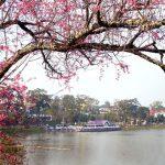 Lễ hội Mai Anh Đào 2018 - Du lịch Đà Lạt tháng 1 - datphongdalat.vn -01