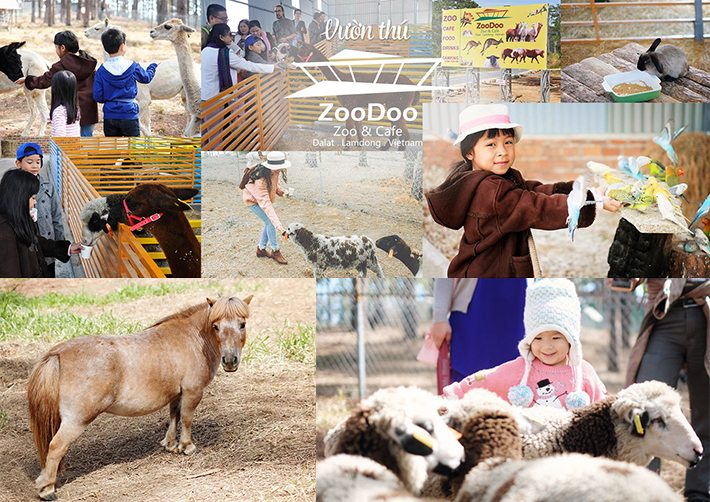 Sở thú Zoodoo
