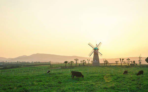 Nông trường bò sữa Vinamilk-Organic-Milk-Farm-datphongdalat.vn-03