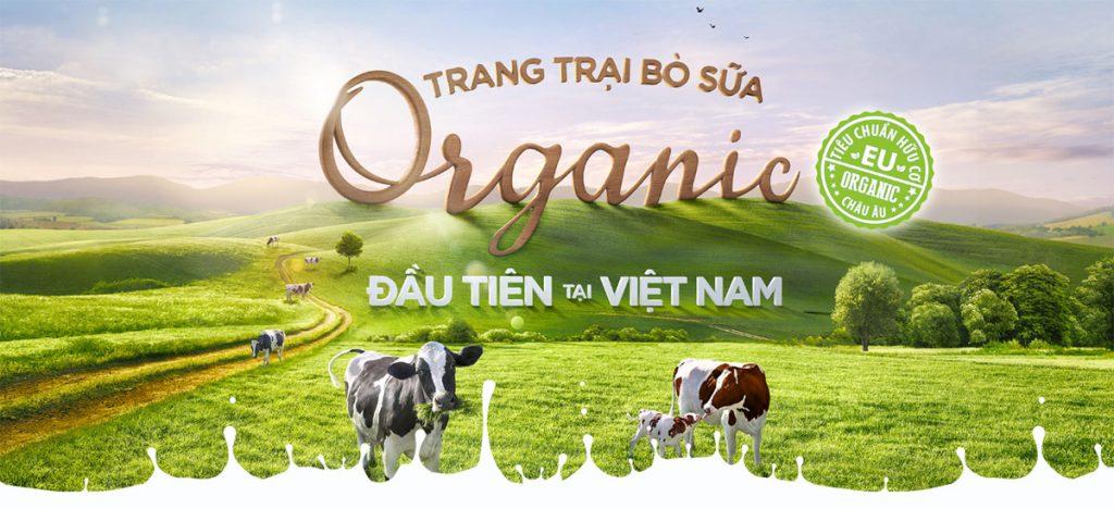 Nông trường bò sữa Vinamilk-Organic-Milk-Farm-Đà Lạt -datphongdalat.vn-5