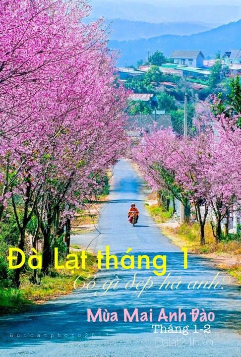 du lịch đà lạt tháng 1 có gì đẹp, đi đâu vui -datphongdalat.vn - 01