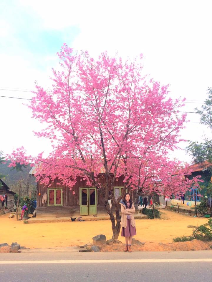 Du lịch Đà Lạt tháng 2 - Đặt phòng khách sạn Đà Lạt giá rẻ gần chợ - datphongdalat.vn-5