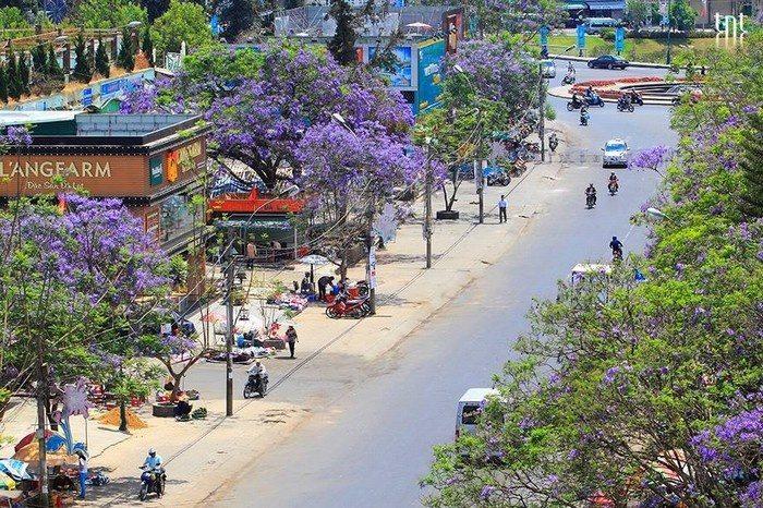 Du lịch Đà Lạt tháng 2 - Đặt phòng khách sạn Đà Lạt giá rẻ gần chợ - datphongdalat.vn-7