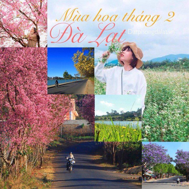 Du lịch Đà Lạt tháng 2 - Đặt phòng khách sạn Đà Lạt giá rẻ gần chợ - datphongdalat.vn-13