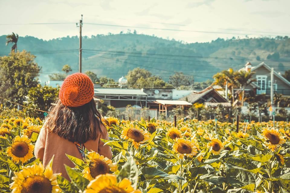 Tour ngoại thành Đà Lạt 1 ngày - cánh đồng hoa hướng dương - datphongdalat.vn-2