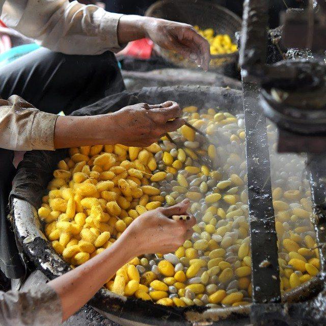 Tour ngoại thành Đà Lạt 1 ngày -trang trại dệt tơ tằm - datphongdalat.vn-01