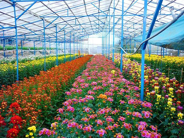 Địa điểm du lịch đẹp ở Đà Lạt luôn thu hút mọi du khách - Làng hoa Vạn Thành