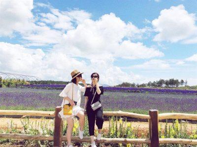 canh dong hoa Oai Huong Lavender Da Lat - tour Da Lat 1 ngay - datphongdalat.vn -17