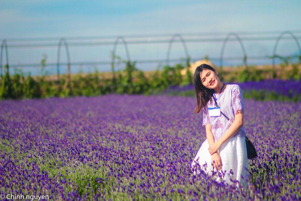 cánh đồng hoa Oải Hương Lavender Đà Lạt - tour Da Lat 1 ngay - datphongdalat.vn -06