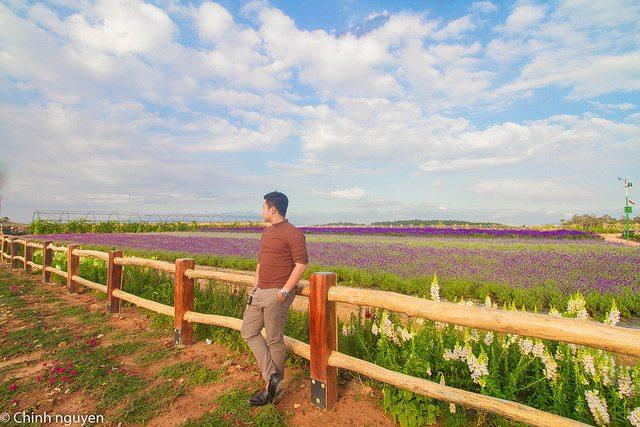 cánh đồng hoa Oải Hương Lavender Đà Lạt - tour Da Lat 1 ngay - datphongdalat.vn -07