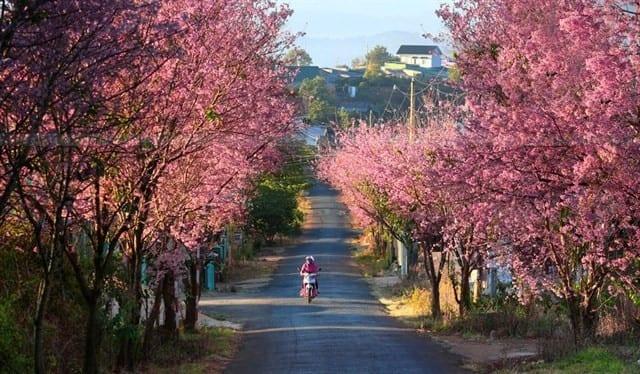 du lịch Đà Lạt mùa nào đẹp nhất