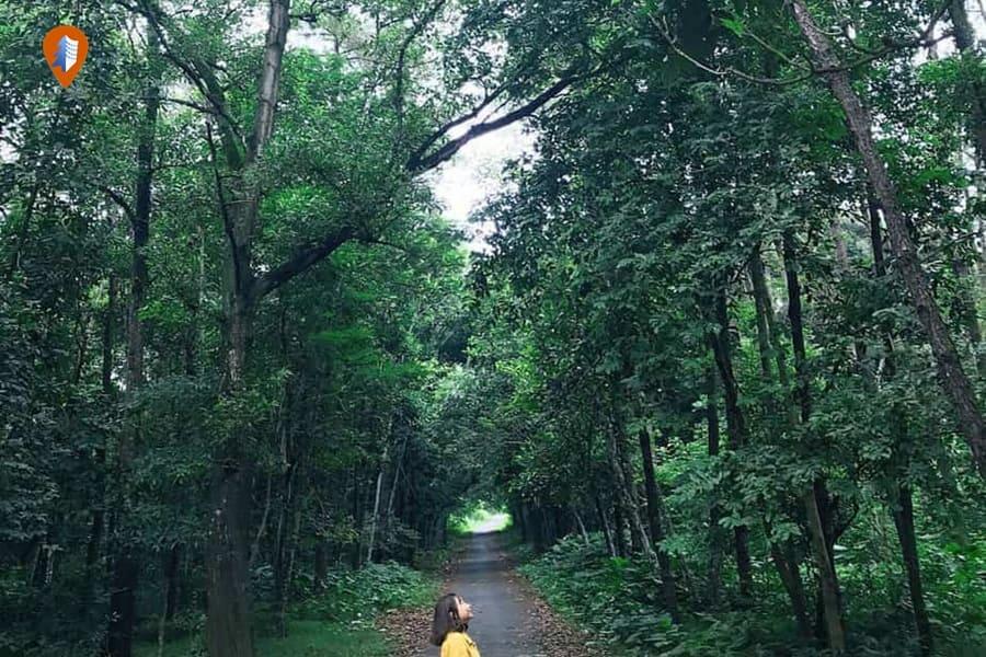 Top 5 khu rừng thông Đà Lạt đẹp nhất 2021