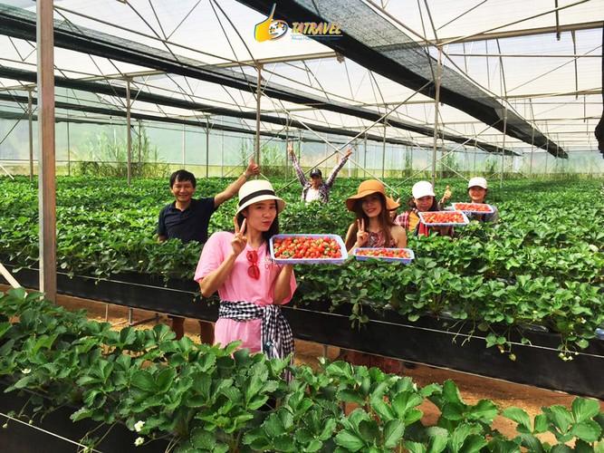 Toplist 5 vườn dâu Đà Lạt đẹp nhất 2021