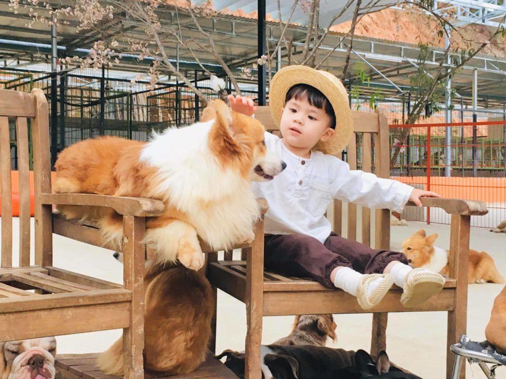Đừng bỏ lỡ trang trại chó Đà Lạt Puppy farm siêu cute nhé các sen ơi!