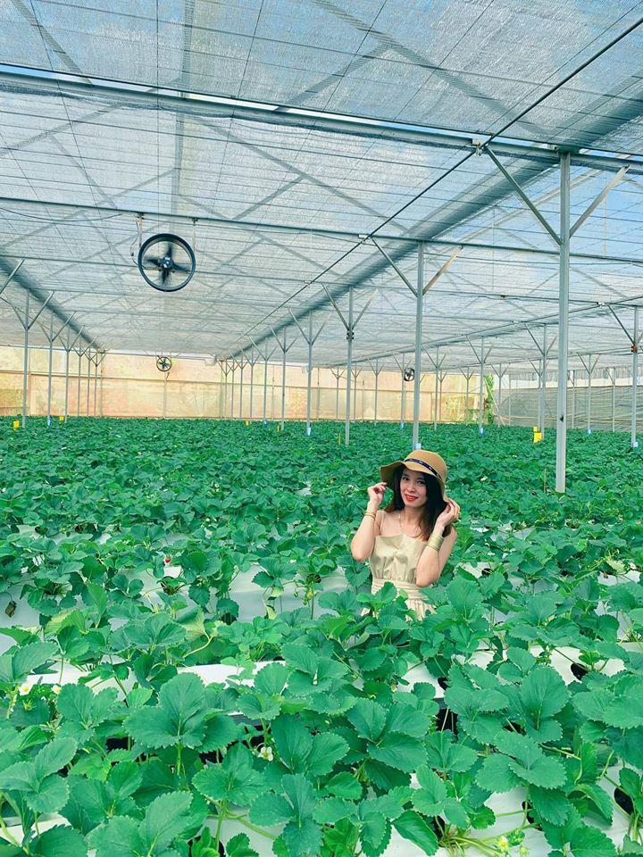 trang trại chó Đà Lạt Puppy farm - datphongdalat.vn-02