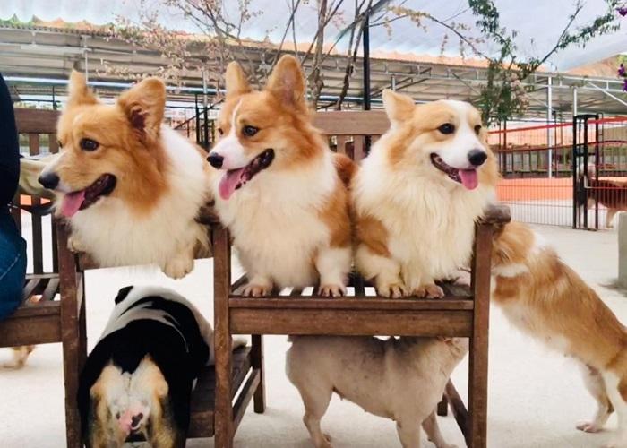 trang trại chó Đà Lạt Puppy farm - datphongdalat.vn-11