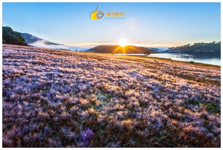Trải nghiệm tour tham quan đồi cỏ hồng Đà Lạt tuyệt đẹp nhất 2021