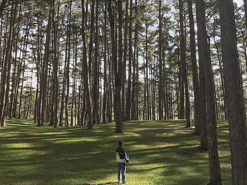 Rừng thông xanh ngát ở Đà Lạt