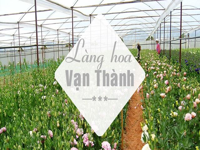 Làng hoa Vạn thành địa điểm du lịch đẹp ở Đà Lạt