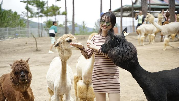 Du khách ghé đến tham quan sở thú The Zoodoo