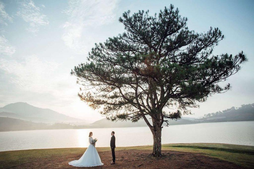 Chụp ảnh cưới bên cây thông cô đơn Đà Lạt