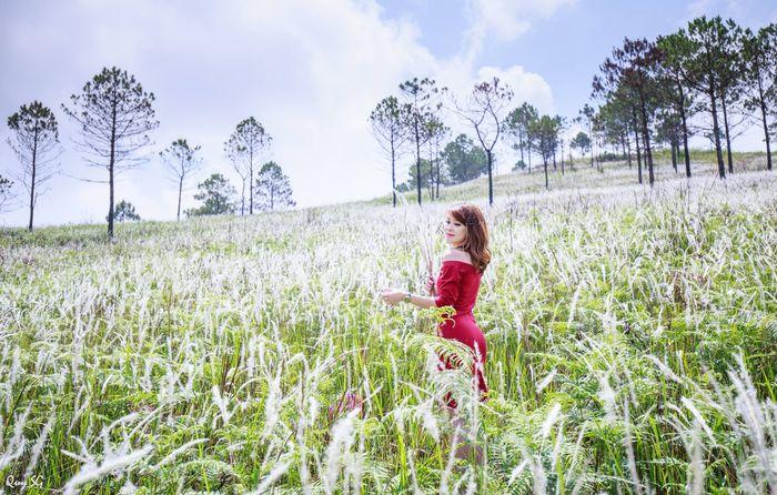 Đà Lạt tháng 7 - màu hoa của những ngọn cỏ lau trắng tinh khôi
