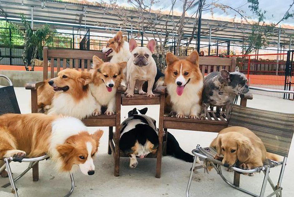 Những chú chó xinh xắn nằm trong khu du lịch đẹp ở Đà Lạt - Nông trại cún Puppu Farm