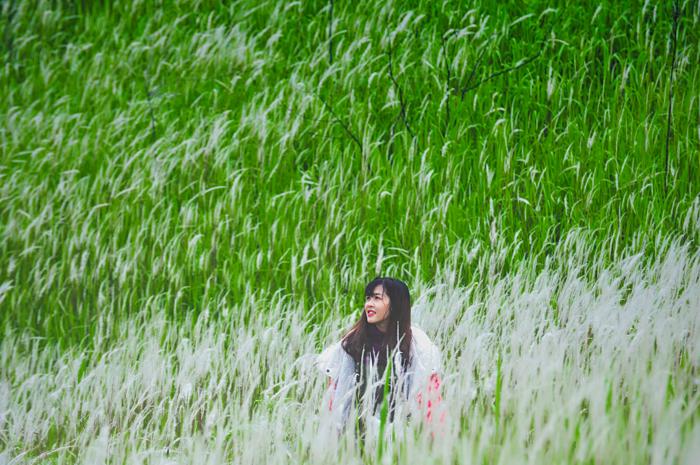 Bông hoa cỏ lau khiến bạn như lạc vào khu rừng thần tiên